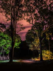 Enter the Dark Forest (stephenk1977) Tags: australia queensland qld brisbane enoggera st street reserve night forest wood woodland convoys2 diffuser nikon d3300 banks