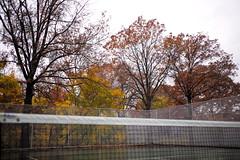 L1000442_p (thebiblioholic) Tags: setonpark riverdale bronx tenniscourt fallcolors