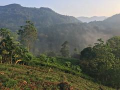 Tea Plantation en-route to Sinharaja Forest Reserve, south Sri lanka, (Graham Ekins) Tags: teaplantation sinharajaforestreserve southsrilanka grahamekins appleiphone6s 2594