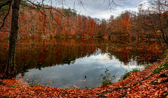 Remember (acipinarli) Tags: light sky reflections green water serene clouds colourful autumn leaves panorama red cloud fall forest lake trees
