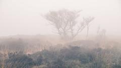Lost (JamesPicture) Tags: ipstones edge nature reserve staffordshire lone tree mist fog black heath outdoor plant