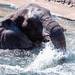 Elephant as Sea Monster
