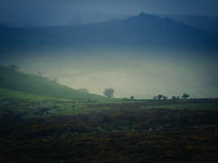 Misty Horizons (Colormaniac too (trying to catch up)) Tags: dartmoor devon uk dartmoornationalpark landscape mist misty bleak moody topaztextureeffects trees topazimpression travel tranquility
