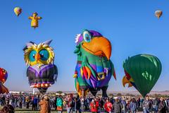 Balloon Fiesta 2016 | Beaked | Morning-Ascension, 07:23AM (Facundity) Tags: aibf albuquerqueinternationalballoonfiesta albuquerque balloonfiesta2016 balloonfiestapark newmexico outdoors eventphotography peglegpete specialshapesrodeo hotairballoons owlberteyenstein squawkurs canon5dmkiv ef70200mmf4lisusm