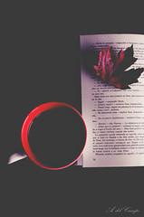 Mi momento (A. del Campo) Tags: naturalezamuerta nikkor nikon nikond7000 caf otoo autumn composicin composition creatividad creacin rojo red libro book taza cup leave leaf stilllife