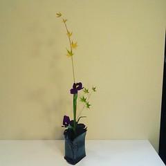Fumiko's simplified #ikebana