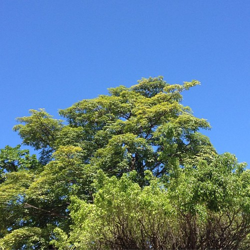 Blue and green #recife #pe #brasil #onephotoaday #day254 #nofilter