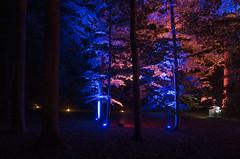 Illumina (ulrike.heck) Tags: blue red tree rot germany deutschland europa europe nightshot forrest nrw schloss wald baum bau nachtaufnahme illumina dyck jchen langzeitbeichtung ulrikeheck