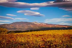 LE GEANT DE PROVENCE EN AUTOMNE (nicolaseudeline) Tags: autumn automne provence vaucluse ventoux
