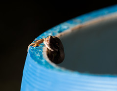 _IMG6372-Edit.jpg (Noelpolar) Tags: barrel frog