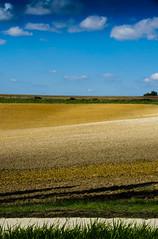 De terre... / 3 (Fabrice Le Coq) Tags: jaune vert bleu ciel nuages paysage extérieur champ herbe plaine fabricelecoq