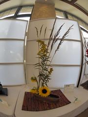 Native Grass, Golden Rod & Sunflower flower arrangement by Nancy Wolf of the Ichiyo & Koryu Schools (nano.maus) Tags: lauritzengardens japaneseflowerarrangement omahabotanicalsociety japaneseambiencefestival