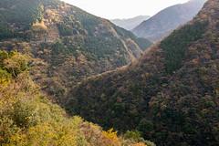 TOKUSHIMA DAYS - Iya valley (junog007) Tags: autumn mountain tree japan river nikon outdoor valley shikoku nano tokushima autumnalleaves d800 iya 2470mm nanocrystalcoat