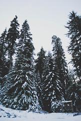 Snoqualmie Pass (AubreyRebecca) Tags: trees winter snow tree nature forest washington woods northwest adventure explore pacificnorthwest wa pnw snoqualmie winterwonderland woodsy snoqualmiepass exploremore wildernessexplorers northwestisbest upperleftusa thatpnwlife adventuresawaitus wildwashington