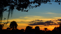 December's first Sunset (Jim Mullhaupt) Tags: pictures camera pink blue sunset red wallpaper sky orange sun color tree weather silhouette yellow clouds landscape photography gold evening photo nikon flickr sundown florida dusk snapshot picture palm exotic p900 tropical coolpix bradenton endofday cloudsstormssunsetssunrises nikoncoolpixp900 coolpixp900 nikonp900 jimmullhaupt
