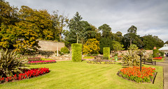 300 - hints of autumn (md93) Tags: belleisle park ayr gardens 366 flowers trees autumn landscaped ayrshire
