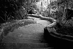 Curved stairs (pacco_racco) Tags: stairs ancient stone forest middlemekong northernlaos leicam6 leicasummicron35mmf20asph kodaktrix400 southeastasia
