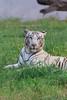 WJ9A8525 (Tarun Chopra) Tags: chandigarh chhatbir