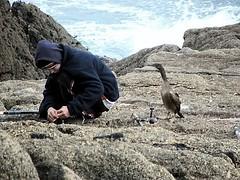 Man and Nature (Blorengia) Tags: cormorant fisherman minack hopeful expectant