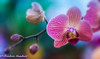 colors of Autumn (frederic.gombert) Tags: orchid orchidee light color colors colorful red green blue sun sunlight plant autumn flower flowers bloom bunch