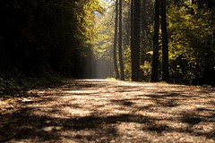The path (HypoX) Tags: trees light path shadow herbst automne nature