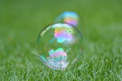 Burbujas (ruimc77) Tags: nikon d700 sigma 105mm f28 ex dg os hsm macro 11 burbuja bolha bolinha buble sabão soap jabon jabón close up curve circle line bokeh dof bubble bubbles bolhas burbujas