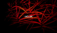 Live or Die (Free Ultra HD Desktop) (Bible Verse Photo) Tags: cactus spike spikes red desktop ultra hd 4000 2000 hires free creative commons romans 148 14 8 new testament god dark wallpapper jesus christian