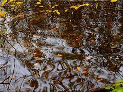 Autumnal reflections on the Lake (Ostseetroll) Tags: badsegeberg deu deutschland geo:lat=5394847365 geo:lon=1031983568 geotagged schleswigholstein segebergersee herbst autumn spiegelungen reflections