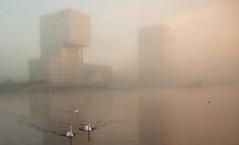 Weerwater Almere ... Mist (Alex Verweij) Tags: mist misty almere start day water alexverweij canon 5d weerwater zwaan zonsopkomst sunrise zon fog foggy