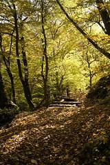 Ruined wooden bridge (sergejjovanovic77) Tags: fruska gora wood path autumn bridge leaves