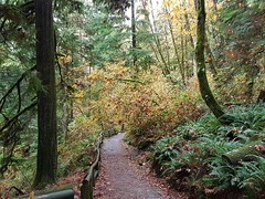 The way through the forest (walneylad) Tags: capilanoriverregionalpark capilanoriver northvancouver westvancouver britishcolumbia canada canyon park parkland urbanpark woods woodland forest rainforest urbanforest tree branches trunk ferns moss trail river cliff water rocks waterfalls whitewater october fall autumn brown green orange white nature scenery