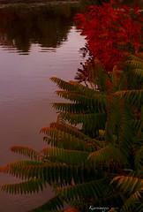 Autumn backlit (kiareimages1) Tags: backlit nature autumn autunno automne