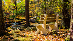 Forest Bench (Catskills Photography) Tags: hbm bench forest trees light fall autumn leaves canon24mmf28stmlens