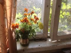 Последние осенние (GrusiaKot) Tags: ucraina ukraine україна украина travelling autumn харьков цветы осень kharkiv kharkov flower flowers autumnal home