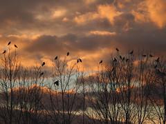 (lucepnx) Tags: nature sky trees woods forest landscape dugaresa croatia birds black dark death creepy scary