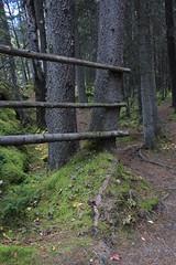 IMG_9450 (ctmarie3) Tags: banffnationalpark lakeminnewanka stewartcanyon trail