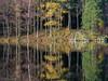 Natures Traffic lights!!! (evorichie101) Tags: landscape nikon sigma lake district tarn blea sunrise reflections vibrant trees