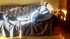 """Sof"" (atempviatja) Tags: sol luz gatos mascotas interior casa descanso sof"