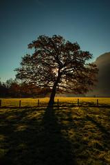 (raimundl79) Tags: wow tree baum landschaft landscape lightroom lndle lichtspiel austria autumn herbst weather nikon nikond800 myexplorer vorarlberg tamron2470mm silhouette