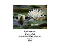 """Water Lilies • <a style=""""font-size:0.8em;"""" href=""""https://www.flickr.com/photos/124378531@N04/31064216571/"""" target=""""_blank"""">View on Flickr</a>"""