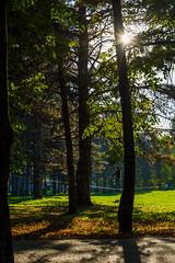 DSC_7482 (sergeysemendyaev) Tags: 2016 russia krasnodar autumn fall     landscape scenery    sunset dusk sun slackline  trees