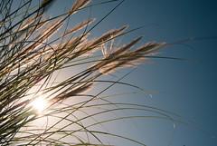 Sunlight (mariecabrejas) Tags: l sunlight plants flowers rayon soleil ville bordeaux nikon d3000