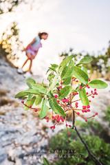 Dans les alpilles (Jean-Christophe Coutand Méheut) Tags: red france flower fleur girl rouge vacances nikon little cath fille photographe 2015 d610 baux paradou jeanchristophe coutand méheut