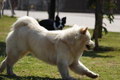 (livia.fernanda) Tags: dog dogs cachorro