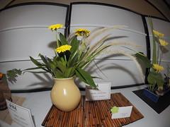 "Gerbera Daisy, Grass, Greens & Lavender by Mary Johnson ""Koryu School"" (nano.maus) Tags: fisheye lauritzengardens japaneseflowerarrangement omahabotanicalsociety japaneseambiencefestival"