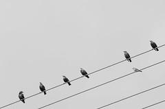 individualism (Pascal Schwab) Tags: bird nikon minimal line telephoto form minimalism 70210 individualism d5100