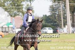 163L_0019 (Lukas Krajicek) Tags: military czechrepublic cz kon koně vysočina vysoina southbohemianregion blažejov dvoreček všestrannost dvoreek