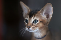 Cat (wietsej) Tags: blue cat sony zeiss a900 135 18 sonnar 13518 za wietsejongsma
