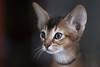 Cat (wietsej) Tags: blue zeiss cat sony 135 18 za sonnar a900 13518 wietsejongsma