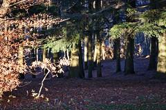 la Foresta a Monte Lori (fotografia per passione) Tags: autunno casentino pratomagno valdarno lorociuffenna montelori leforestedelpratomagno marksoetebierphotography